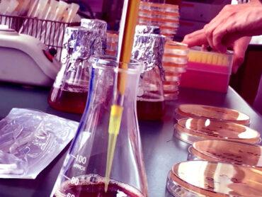 Mikrobiologiczny pejzaż dźwiękowy